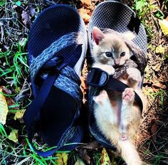 From the @EmrgencyKittens Twitter feed.  My favorite things: kittens and Chacos.