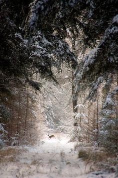 {<3} Forest deer