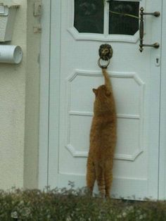 Funny Cats - 30 Pics – Funnyfoto | Funny Pictures - Videos - Gifs - Page 28
