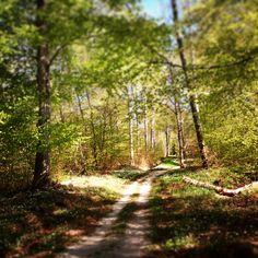 Mountainbike trails outside Visby.