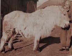 Donkey, Goats, Horses, Animals, Animales, Animaux, Donkeys, Horse, Goat
