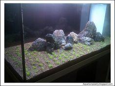 Preparation and Maintenance of a Planted Aquarium With a Nutrient Rich Substrate - Aqua Botanic's Aqua Bloggin