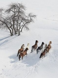 Beautiful horses in winter #Winter #Landscape #WinterBeauty…