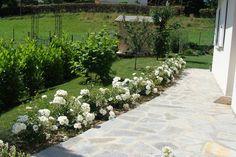 Les 76 rosiers du jardin - Au Jardin Fleuri