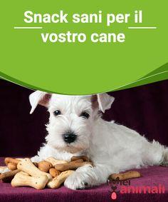 Snack sani per il vostro cane   Gli #snack preparati in #casa sono un modo completo e #sano per dare al vostro #cane le sostanze #nutritive di cui ha bisogno. #Alimentazione