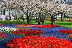 Sakura park, Japan