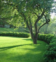 north hill garden - Google Search