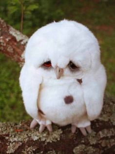 An In-Need-Of-Prozac Owl. (Depressed after a failed relationship, I think.)