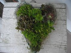 Chicken Wire Heart Frame Planter For Live Wreath Hens by LakesGirl, $12.95
