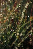 mother nature's pearls by `devilicious on deviantART