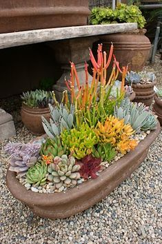 Here's a great container planting idea for your rock garden - pot an assortment of succulents in low containers to enjoy outdoors throughout the warm weather, then bring those pots inside when the temps turn cold. We are a Minneapolis MN landscaping contractor, and we do #RockGardens. http://www.aldmn.com