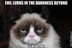 Grumpy Cat - Grumpy Cat - Ideas of Grumpy Cat - sphotos-a.fbcd The post Grumpy Cat appeared first on Cat Gig. Funny Grumpy Cat Memes, Funny Cats, Funny Animals, Cute Animals, Grumpy Cats, Funny Memes, Kitty Cats, Grumpy Dwarf, Funny Horses