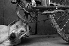 pinterest.com/fra411 #sleeping #dog