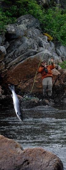 Wahey! #salmon......Beautiful shot!!!