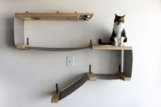 Food, water, and napping, all in one structure Allows your cat to lounge and eat off of the ground Dog-proof sisal holes Long, solid wood feeding shelf and heavy-weight canvas Each fabric section is tested to hold 65 lbs