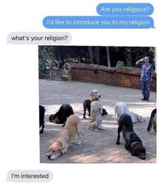 55 Extremely Funny Images Will Make You Laugh Hard This is the real life. Rebel circus Out Of The World Memes – The Webly Funny Animal Memes, Cute Funny Animals, Funny Cute, Funny Dogs, Hilarious Memes, Stupid Memes, Memes Humor, Dog Memes, True Memes