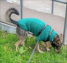 Купить Одежда вязаная для животных (собачки или кошки) Dogs, Animals, Animales, Animaux, Pet Dogs, Doggies, Animal, Animais