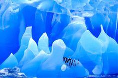 Bing fotos: Chinstrap Penguins on an iceberg in Antarctica -- Frans Lanting/Corbis © Frans Lanting, National Geographic Photographers, Nature Sauvage, World Wallpaper, Wallpaper Art, Himmelblau, Wildlife Photography, Travel Photography, Belle Photo