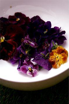 Viola jelly