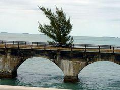 Tree on the old Key West Bridge
