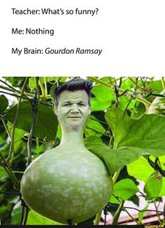 Teacher: What's so funny? Me: Nothing My Brain: Gourdon Ramsay - iFunny :) What's So Funny, Really Funny Memes, Stupid Funny Memes, Funny Laugh, Funny Relatable Memes, Gordon Ramsay Funny, Celebrity Memes, Really Funny Pictures, Mood Pics