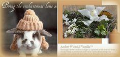 Amber Wood and Vanilla
