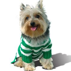Size #12, Designer Dog Hoodie Sweater Sweatershirt, Forest Green Stripe, Casual & Stylish - http://www.thepuppy.org/size-12-designer-dog-hoodie-sweater-sweatershirt-forest-green-stripe-casual-stylish/
