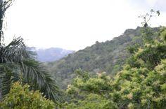 La vista desde la casa de mi Papá en Utuado...