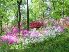 national arboretum washington dc   United States National Arboretum News, Information, Videos, Images