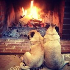 Nothing better than sitting by a warm fire with a loved one on a wintry day.
