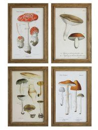 You'll love the 'Mushroom' Vintage Reproduction Framed Painting Print at Birch Lane - With Great Deals on all products and Free Shipping on most stuff, even the big stuff.