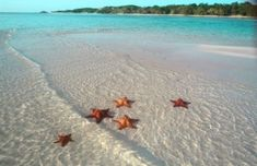 Isla Sanoa is a breathtaking, beautiful uninhibited island off the coast of the DR. The red starfish is indigenous at this island.