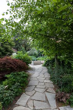 A gardne path made if irregularly shaped pieces of flagstone forming 'crazy paving'.