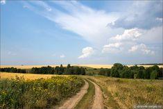 Картина: золотые поля, холмы и полевая дорога