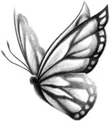 Butterfly sketch. So pretty. Love it.