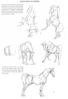 The Art of Animal Drawing: Construction, Action Analysis, Caricature (Dover Art Instruction) Horse Drawings, Art Drawings Sketches, Animal Drawings, Manga Drawing Tutorials, Art Tutorials, Horse Sketch, Construction Drawings, Anatomy Drawing, Animal Sketches
