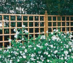 The Heavy Duty Trellis will be the perfect feature for your garden landscape. It can be used in many locations, for multiple purposes.