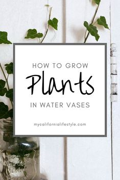 Plants That Grow in Water Vases and How to Grow Them! Plants That Grow in Water Vases and How to Gro Plants Grown In Water, Water Plants Indoor, Aquatic Plants, Plant In Water, Water Garden Plants, Potted Plants, Hydroponic Growing, Hydroponic Gardening, Growing Plants