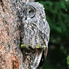 Nature Gif, Nature Videos, Baby Animals, Cute Animals, Bird Gif, Owl Bird, Cool Pets, Gifs, Sea Creatures