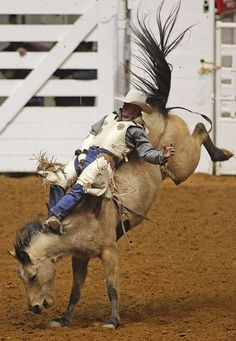 Chris Harris rides a 79 score on his bareback bronc ride. Fort Worth