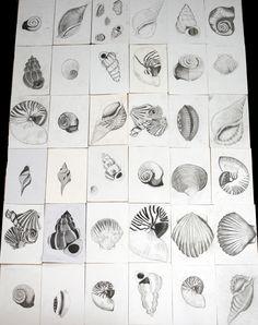 GCSE Year 10 Pencil, tonal shell drawings