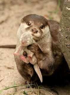 cute otters