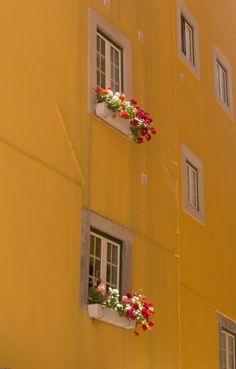Janela de Lisboa | Fotografia de José Daniel Ferreira | Olhares.com
