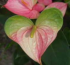 Fleurs rose vert