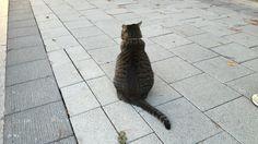 길 위의 집고양이