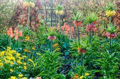 Warme Voorjaarstuin (april-mei) De vroege bloeiers zoals tulpen zorgen voor extra kleur in het voorjaar, als de vaste planten nog maar net boven de grond komen. Bollen met een stoere bloeiwijze en structuur zoals; Allium (sierui), Frittillaria (keizerskroon) verdienen zeker ook een plekje in de beplanting.