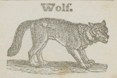 Wolf.A history of animals.1843.