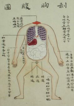 山脇東洋の解剖図録「蔵志」(1754年)当時の身分制から、罪人の解剖をし、それを描くのは雇われたアシスタントだったそうだ。