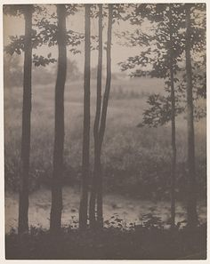 Landscape  Alvin Langdon Coburn (British, Boston, Massachusetts 1882–1966 Wales)  Date: 1902 Medium: Platinum print Dimensions: 24.0 x 18.8 cm. (9 7/16 x 7 3/8 in.)