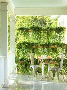 A screen of hanging plants.